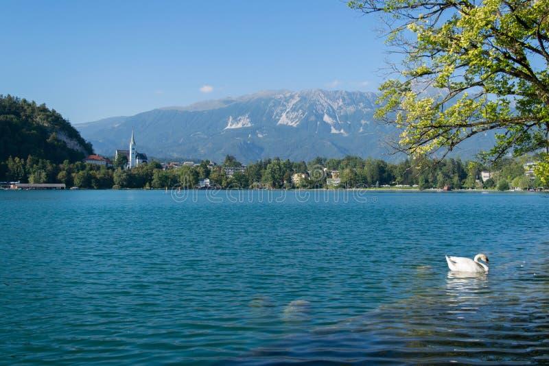 流血的湖 有小朝圣教会的美丽的山湖 库存图片