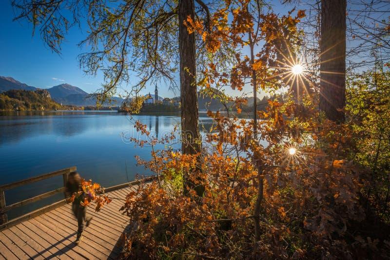 流血,斯洛文尼亚-旅游在活动中在布莱德湖旁边的码头美好的秋天日出的 库存照片