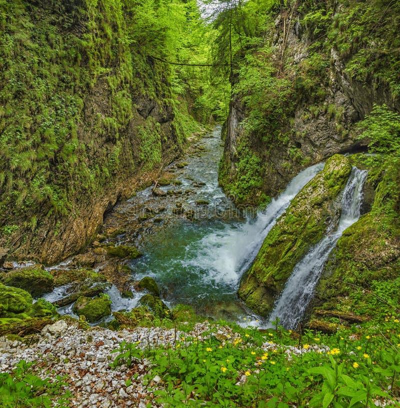 流经峡谷的Galbena河 图库摄影