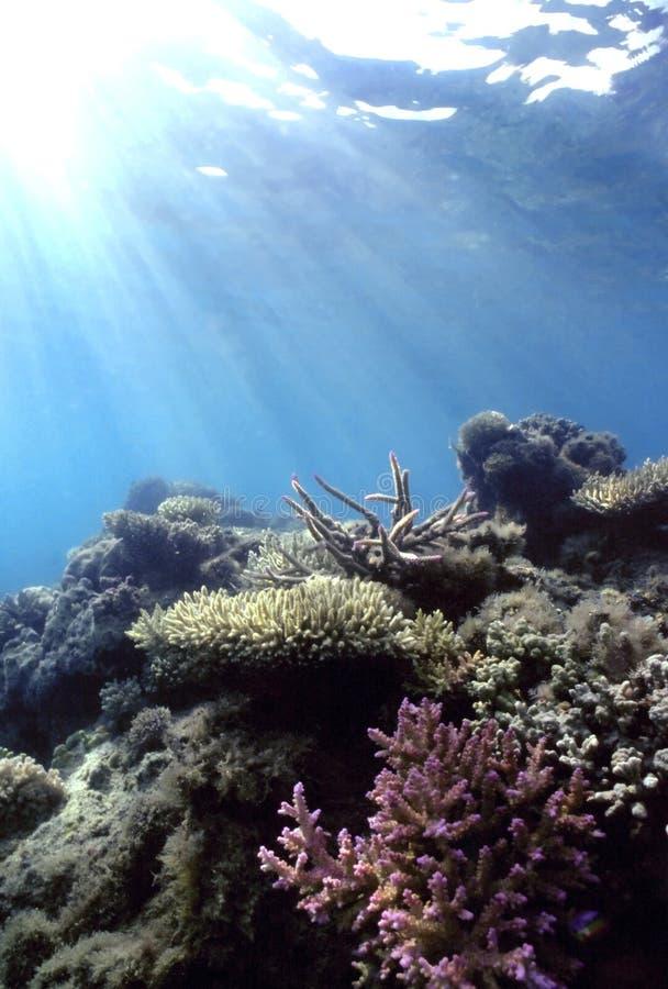 浅和平的礁石 免版税库存照片