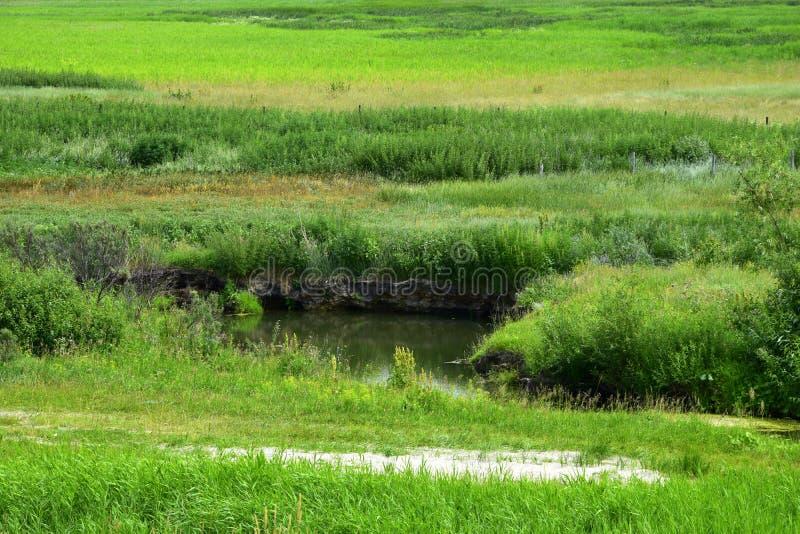 浅河流经在高沿海草丛林的一个领域  库存照片