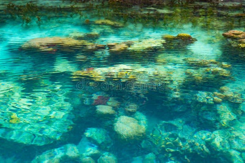 浅珊瑚礁在绿松石透明水,印度尼西亚中 免版税库存图片