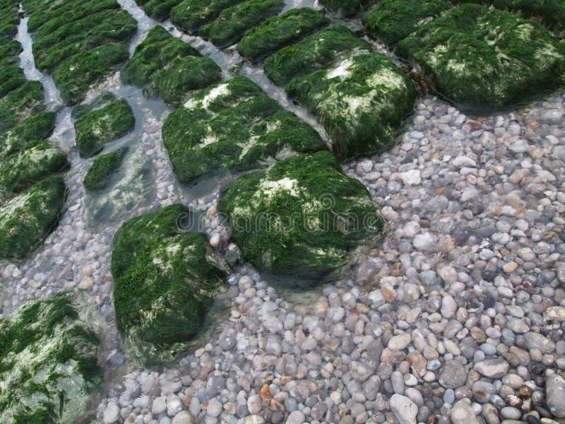 浅石头用明亮的海藻盖 库存照片