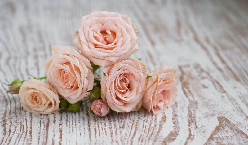 浅粉红色的玫瑰 库存图片