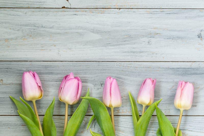 浅粉红色的郁金香行在木背景,顶视图的 免版税库存图片