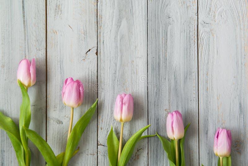 浅粉红色的郁金香行在灰色木背景,顶视图的 库存照片