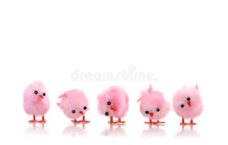 浅粉红色鸟小鸡 免版税库存照片