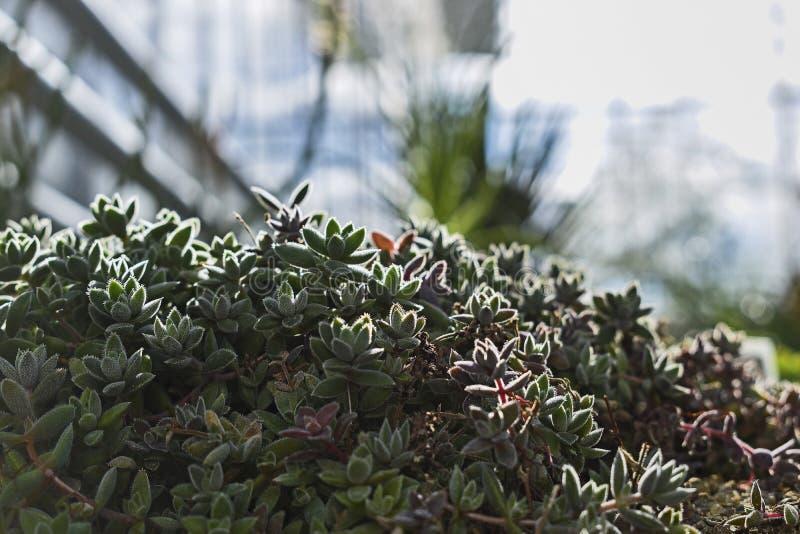 浅绿色的植物 库存图片