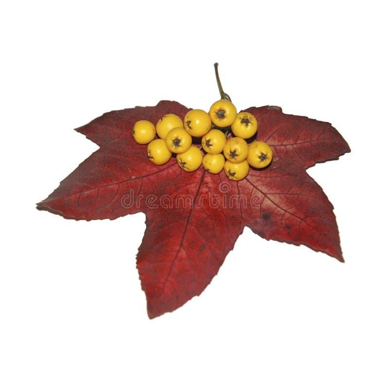 浆果叶子 库存照片