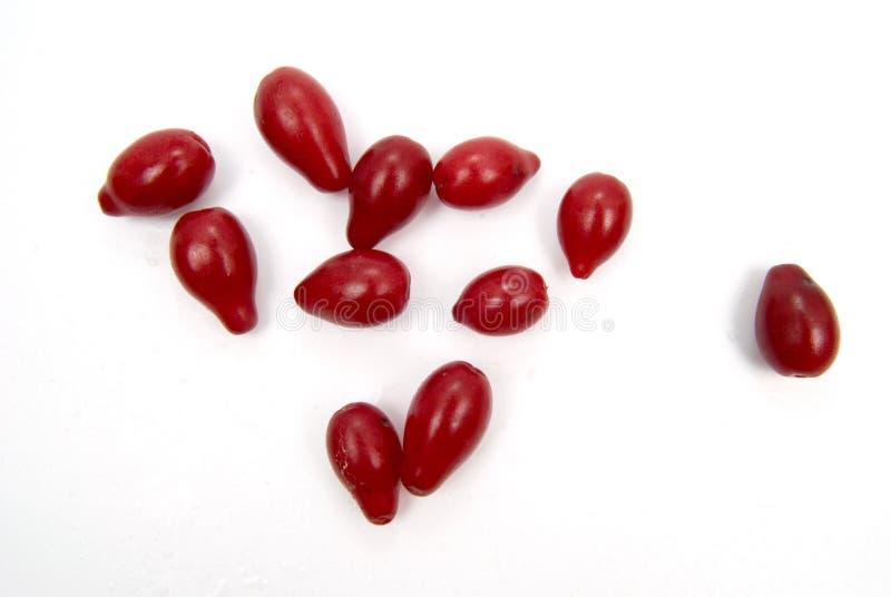 浆果异乎寻常的红色 免版税图库摄影
