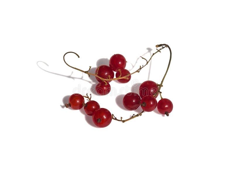 浆果无核小葡萄干仍然生活红色 库存照片