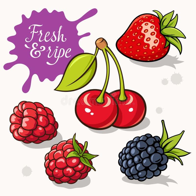 浆果集 向量例证