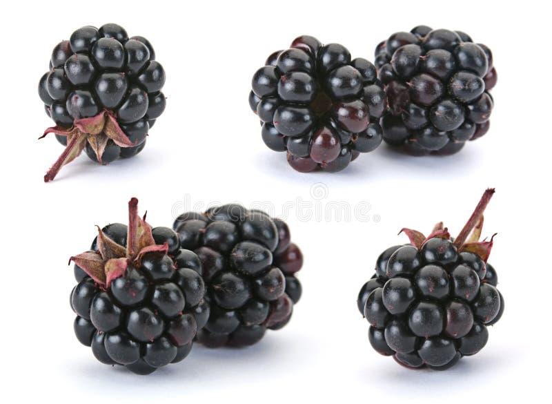 浆果黑莓 库存照片