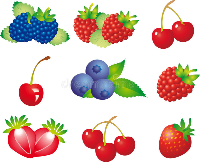 浆果 向量例证