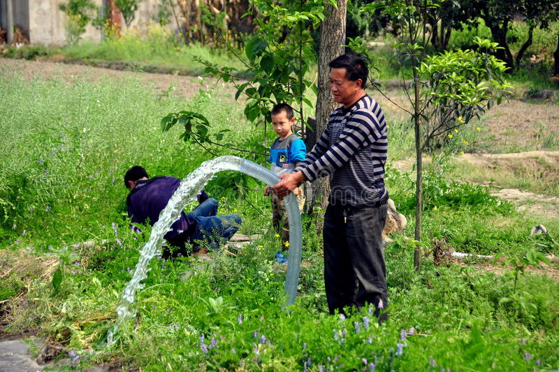 彭州,中国: 农夫浇灌的领域 库存照片