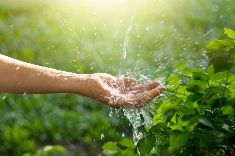 浇灌倾吐在绿色自然背景的妇女手上 免版税库存照片