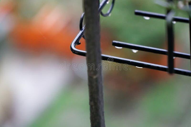 浇灌在花盆室外迷离背景的下落网站或移动设备的 库存照片