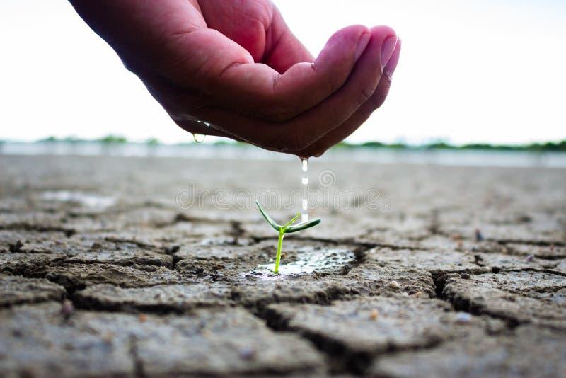 浇灌地面和树的手贫瘠 免版税图库摄影