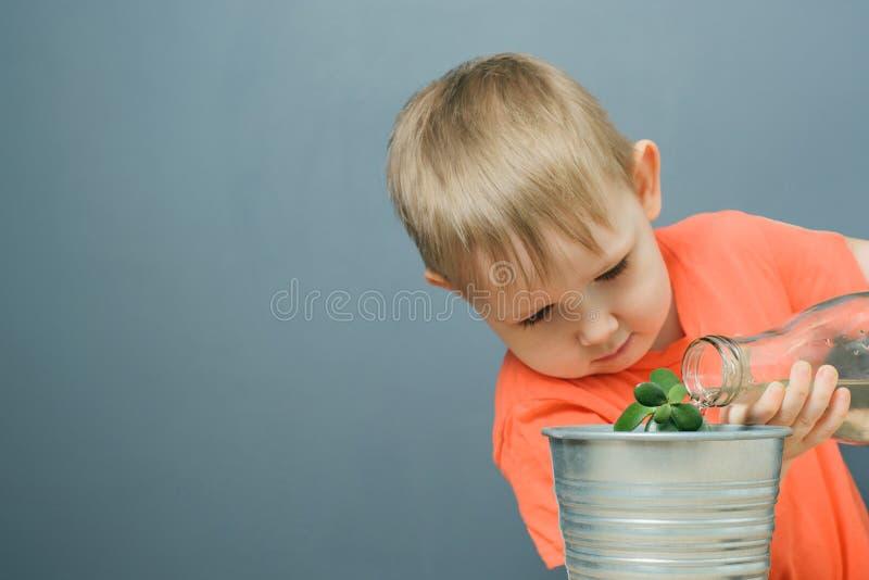 浇灌年轻金钱树植物的欧洲白肤金发的男孩孩子 免版税库存照片