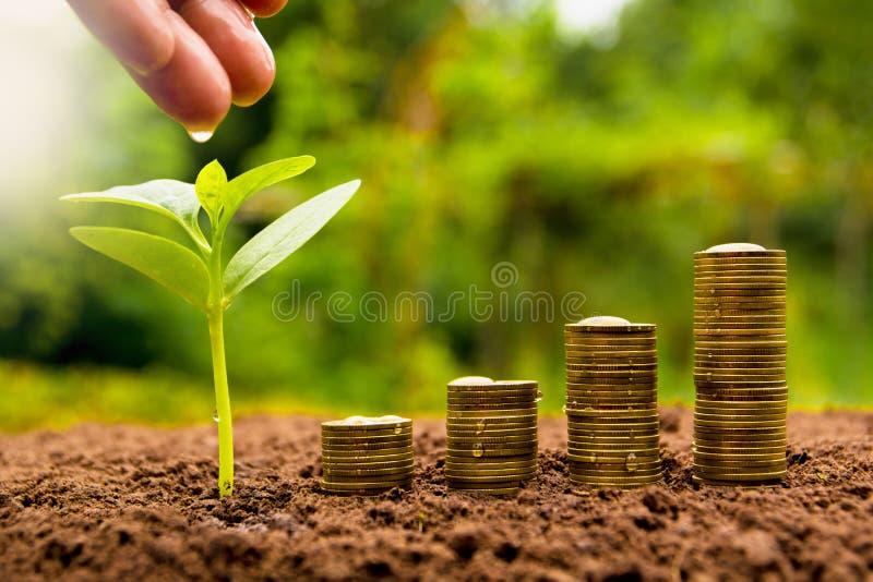 浇灌有堆硬币的女性手年幼植物生长公共汽车的 免版税库存照片