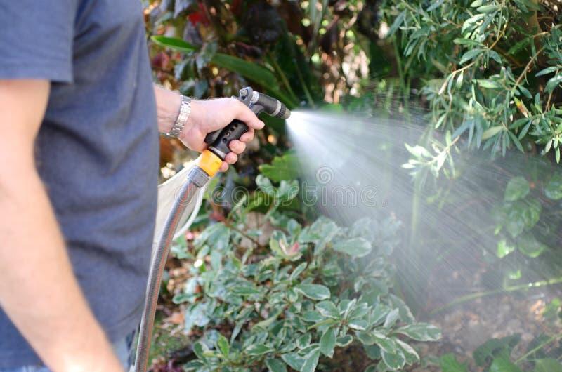 浇灌有橡胶软管的庭院 库存图片