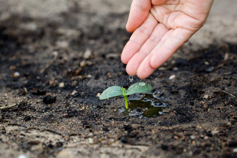 浇灌树苗土壤在庭院里 图库摄影