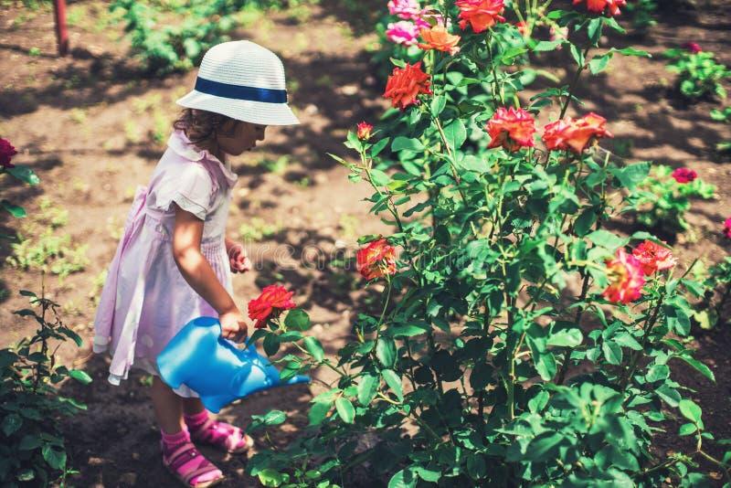 浇灌玫瑰色花的逗人喜爱的小女孩在庭院里 图库摄影