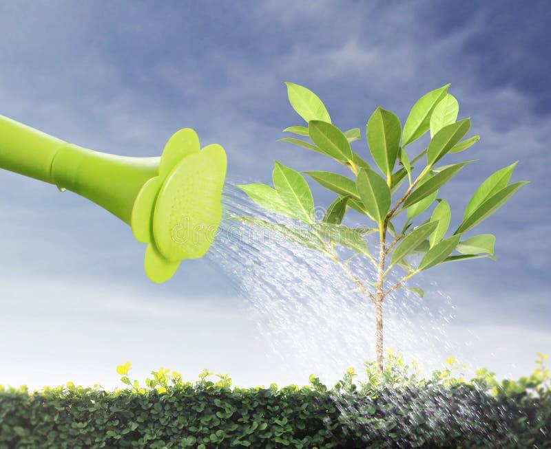 浇灌的年轻树 免版税库存图片