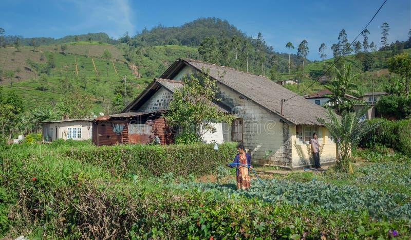 浇灌菜园用圆白菜的资深妇女在农村风景 免版税库存图片