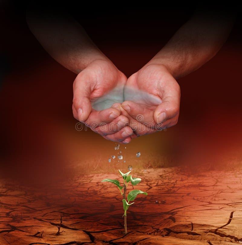 浇灌年幼植物的手 免版税图库摄影