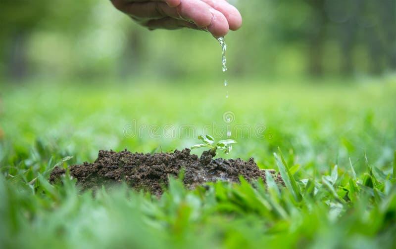 浇灌年轻绿色植物的农夫的手 图库摄影