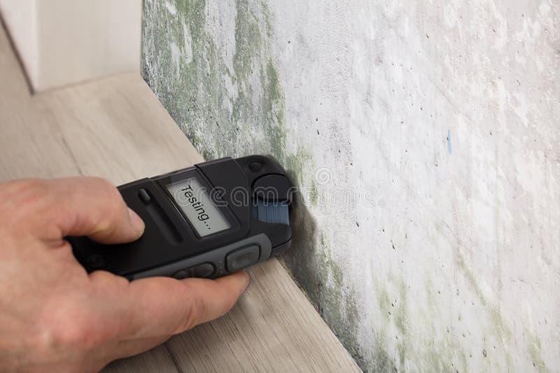 测试发霉的墙壁的人手 免版税库存照片