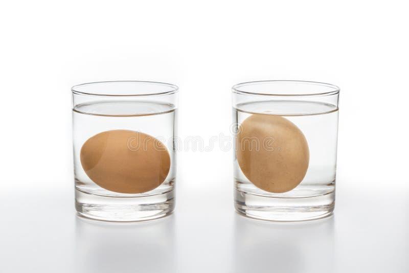 测试对于新鲜和腐烂的鸡蛋 库存照片