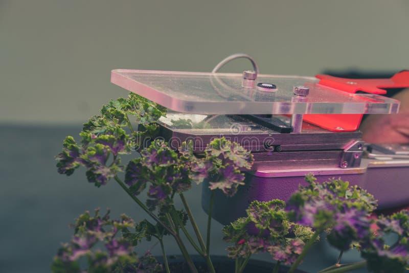 测量的植物growi光合作用二氧化碳测量设备  图库摄影
