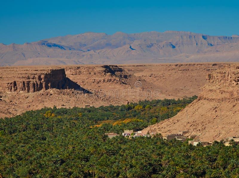 济兹河谷的,摩洛哥巨大的棕榈树丛 r 库存图片