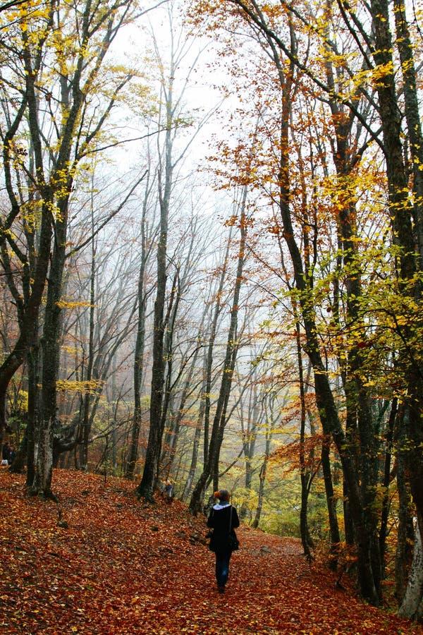 浓雾的秋天公园与鬼的剪影-与树和红色干燥落叶的秋天风景 免版税图库摄影