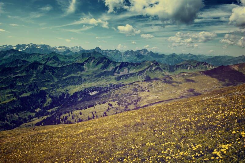 浩大的高山山脉和花田 免版税库存照片
