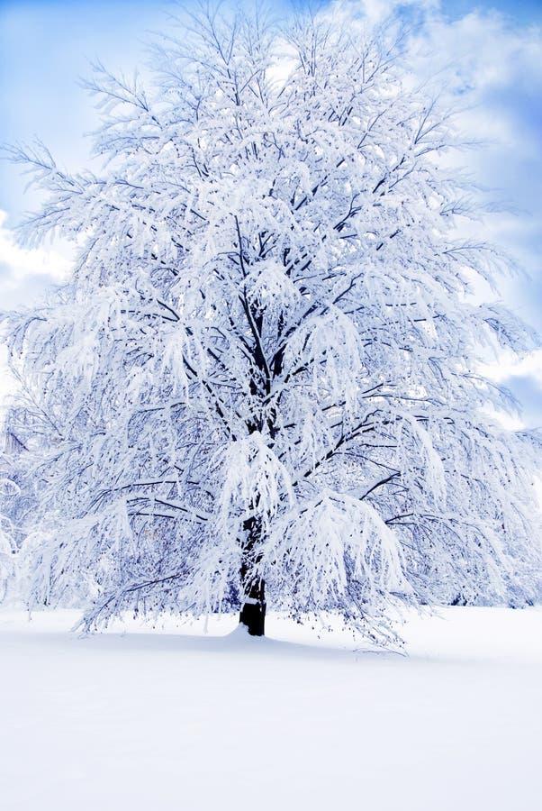 浪漫冬天 库存照片