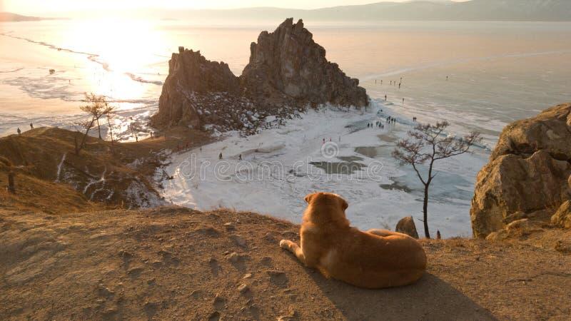 浪漫在Olkhon海岛岸的框架孤独的无家可归的狗  Shamanka岩石全景从海角布尔汗的 美丽 免版税库存照片