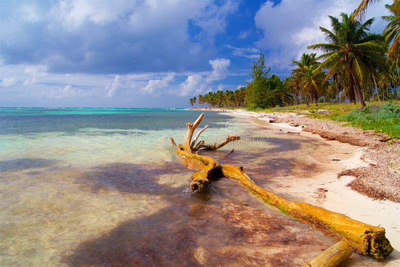 浪漫海滩在有棕榈树和白色沙子的加勒比 库存照片