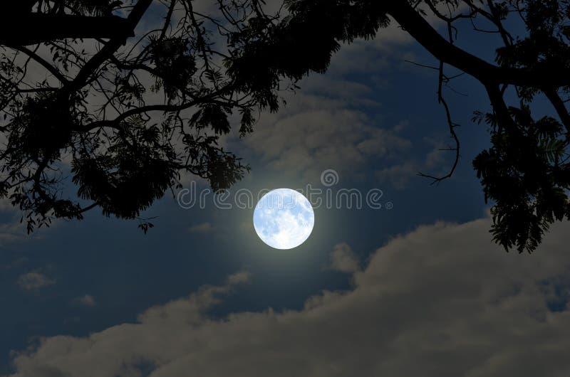 浪漫满月冬天夜 免版税库存照片