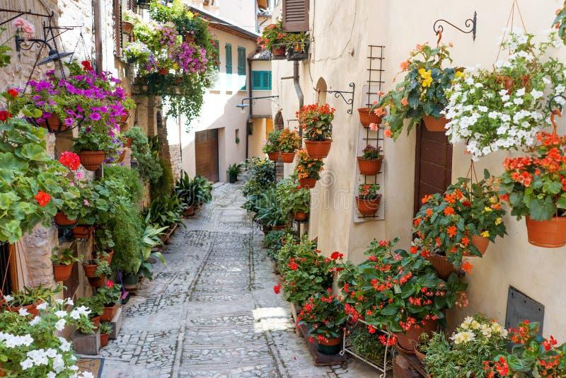 浪漫花卉街道在斯佩洛,中世纪镇在翁布里亚,意大利 免版税库存图片