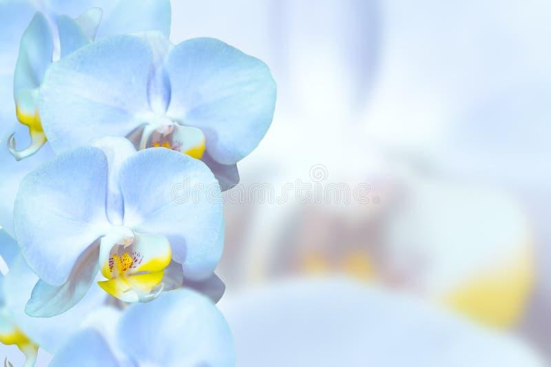 浪漫蓝色的兰花花 库存图片