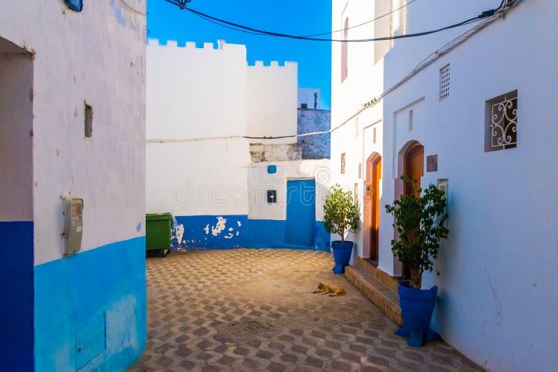 浪漫街道、罐植物和花在艾希拉,摩洛哥白色麦地那  库存照片