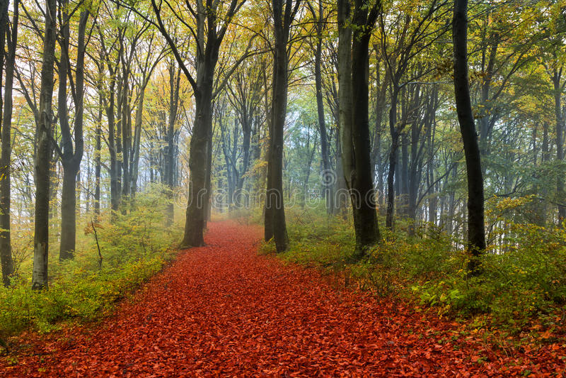 浪漫足迹在秋天期间的森林里 库存照片