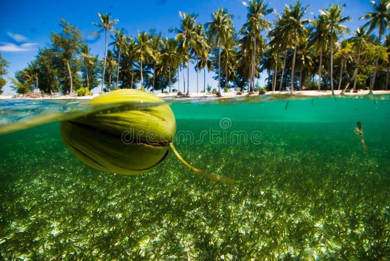 浮动椰子透明的水kapoposang印度尼西亚佩戴水肺的潜水潜水者 库存照片
