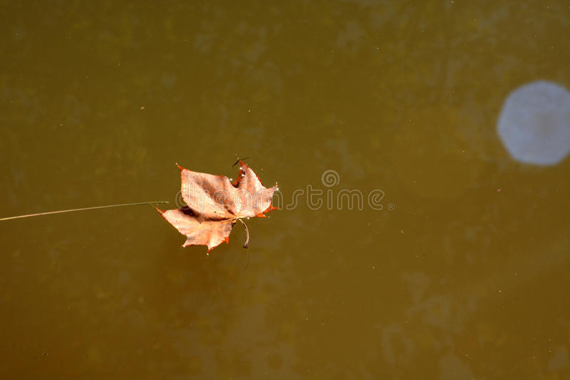 浮动的叶子 免版税库存图片