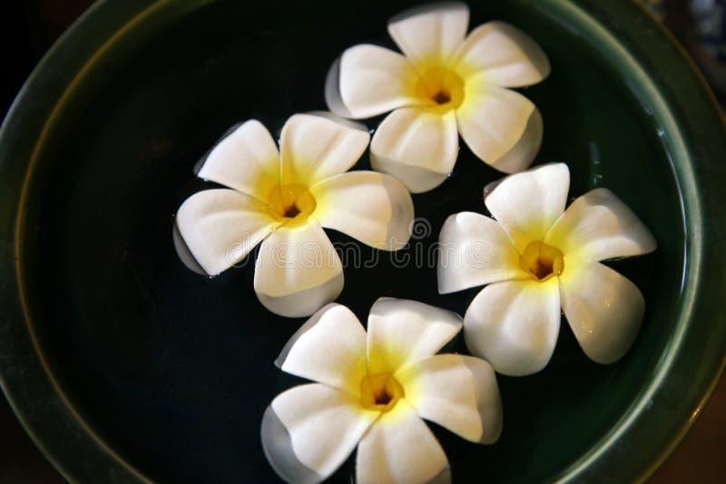 浮动的花 库存照片
