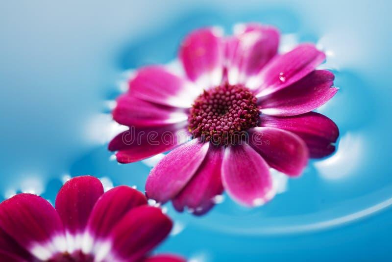 浮动的花 图库摄影