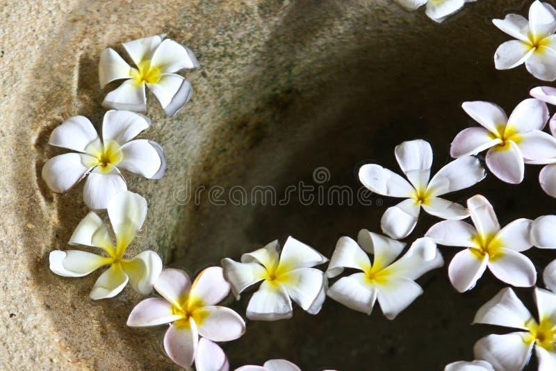 浮动的花 库存图片